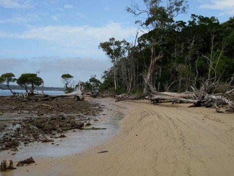 Coochie Mudlo Island