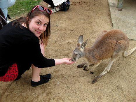 Feeding fluffy kangaroo